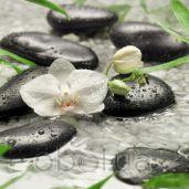 Обои Komar Flower & Textures 8-319