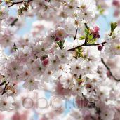 Обои Komar Flower & Textures 8-507