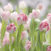Обои Komar Flower & Textures 8-708