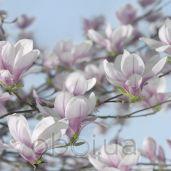 Обои Komar Flower & Textures 8-738