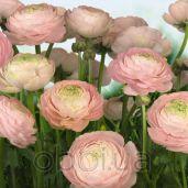Обои Komar Flower & Textures 8-894