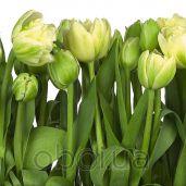 Обои Komar Flower & Textures 8-900