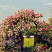 Обои Komar Flower & Textures 8-936