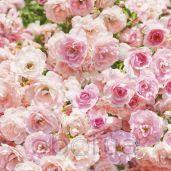 Обои Komar Flower & Textures 8-937