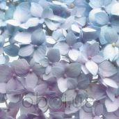 Обои Komar Flower & Textures 8-961