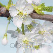 Обои Komar Flower & Textures xxl2-033
