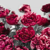 Обои Komar Flower & Textures xxl4-002