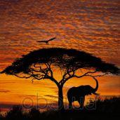 Обои Komar National Geographic 4-501